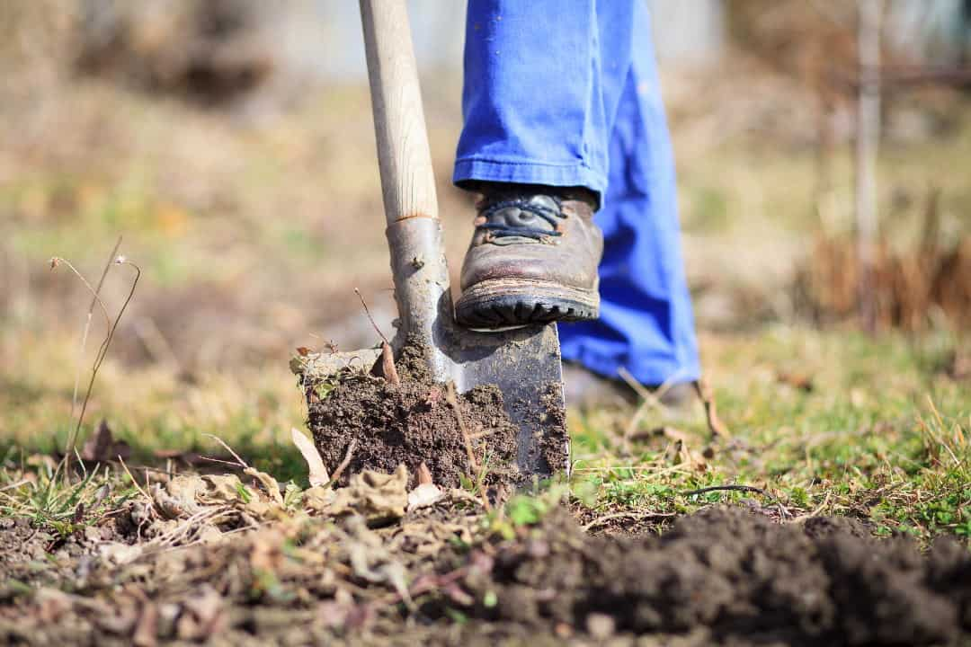 Gardening in Spring – Vegetables and Flowers to brighten your garden