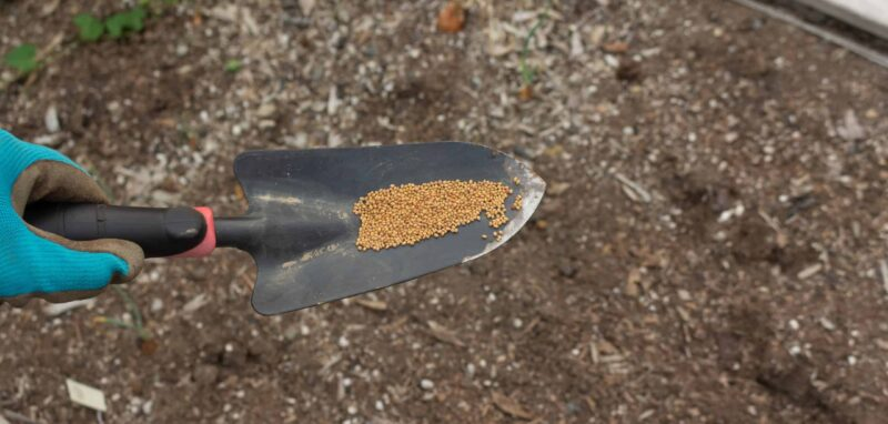 Picture of Seeds on a Trowel