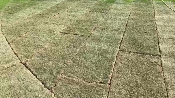 Ken's Weekly Tips – Don't turf a new lawn in hot weather
